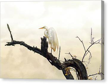 Canvas Print - Great White Egret #1 by Donnie Smith