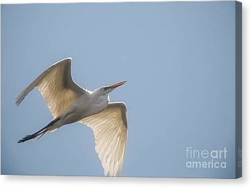 Canvas Print featuring the photograph Great White Egret - 2 by David Bearden