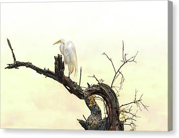 Canvas Print - Great White Egret #2 by Donnie Smith