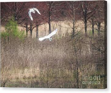 Canvas Print featuring the photograph Great White Egret - 3 by David Bearden