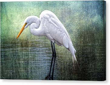 Great White Egret Canvas Print by Bonnie Barry