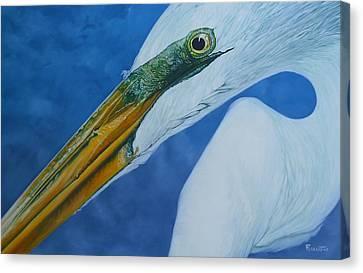 Canvas Print - Great White Egret by Jon Ferrentino