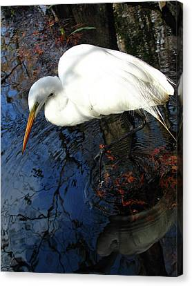 Great White Egret Canvas Print by Juergen Roth