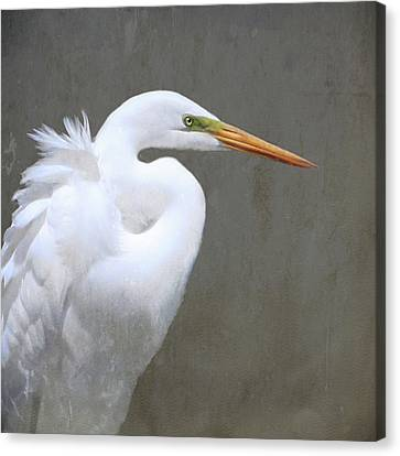 Great White Egret Canvas Print by Karen Lynch