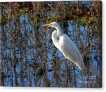 Great White Egret Canvas Print by Wingsdomain Art and Photography