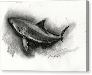 Great White Shark Drawing Canvas Print