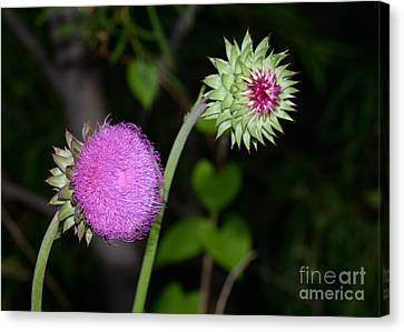 Family Of Wild Flowers Canvas Print