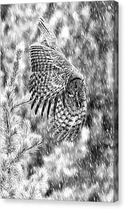 Great Grey Owl In Snowstorm  Canvas Print