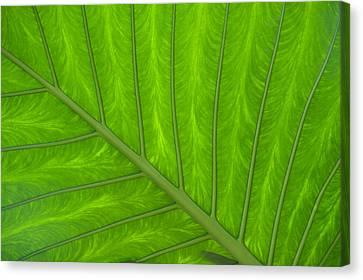 Green Abstract No. 4 Canvas Print