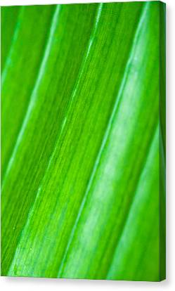 Green Abyss Canvas Print by Sebastian Musial