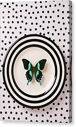 Green And Black Butterfly On Plate Canvas Print by Garry Gay