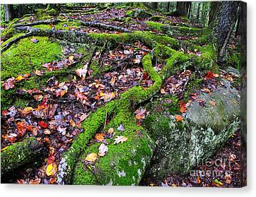 Green And Serene Canvas Print by Thomas R Fletcher