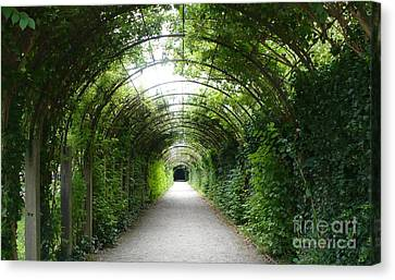 Green Arbor Of Mirabell Garden Canvas Print by Carol Groenen