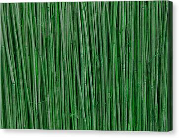 Green Bamboo Canvas Print