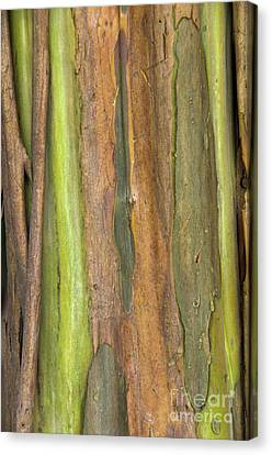 Canvas Print featuring the photograph Green Bark 3 by Werner Padarin