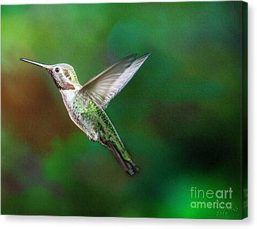 Green Beauty Canvas Print by David Millenheft