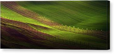 Green Belts Of Fields Canvas Print by Jenny Rainbow