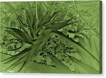 Canvas Print featuring the photograph Green Bird Of Paradise by Nareeta Martin