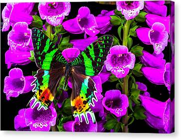 Foxglove Flowers Canvas Print - Green Butterfly On Foxglove by Garry Gay