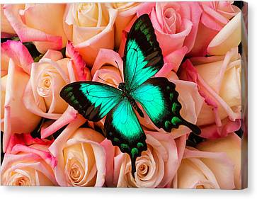 Green Butterfly On Pink Roses Canvas Print