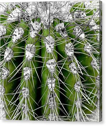 Survivor Art Canvas Print - Green Cactus by Frank Tschakert