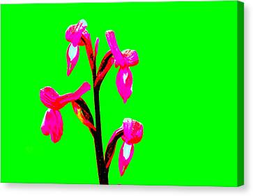 Green Champagne Orchid Canvas Print by Richard Patmore