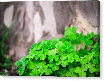 Canvas Print featuring the photograph Green Clover And Grey Tree by John Williams