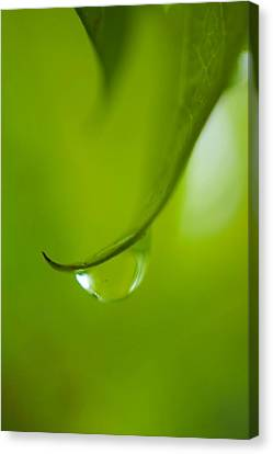 Green Drop Canvas Print