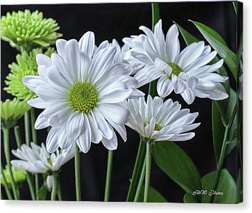 Canvas Print featuring the photograph Green Eyed Daisy by Bonnie Willis