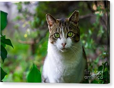 Green Eyes - Cat In The Wilderness Canvas Print by Thomas Jones