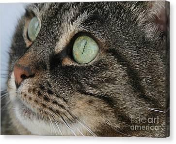Green Eyes Canvas Print by Debra Straub