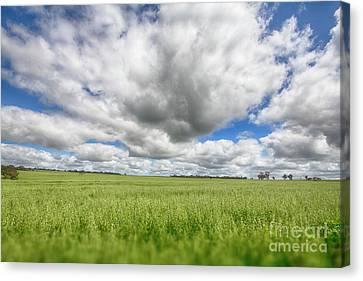 Canvas Print featuring the photograph Green Fields 2 by Douglas Barnard