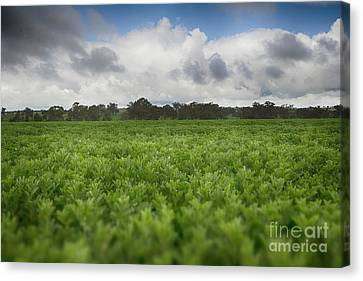 Canvas Print featuring the photograph Green Fields 4 by Douglas Barnard