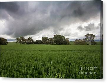 Canvas Print featuring the photograph Green Fields 5 by Douglas Barnard