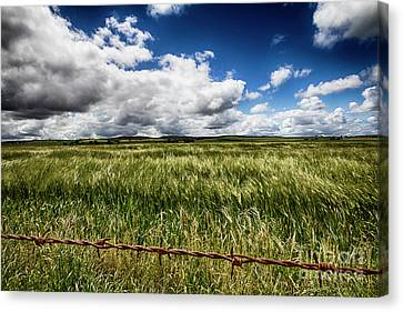 Canvas Print featuring the photograph Green Fields by Douglas Barnard