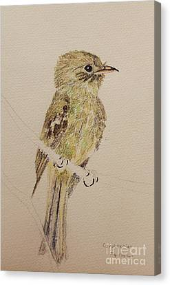 Green Flycatcher Canvas Print
