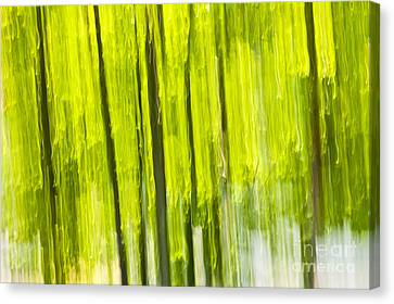 Green Forest Abstract Canvas Print