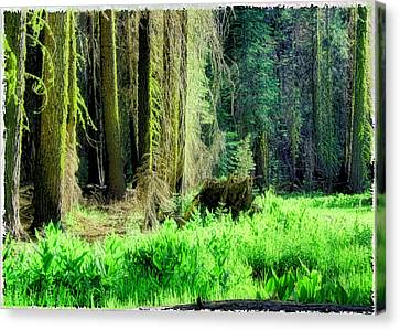 Green Forest Canvas Print by Michael Cleere