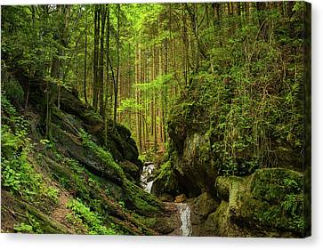 Green Forest Canvas Print by Sendroiu Andrei