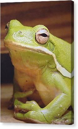 Green Frog Canvas Print by J R Seymour