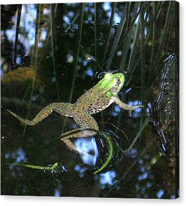 Canvas Print featuring the photograph Green Frog by Patricia Januszkiewicz