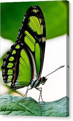 Green Goddess Canvas Print by E Mac MacKay