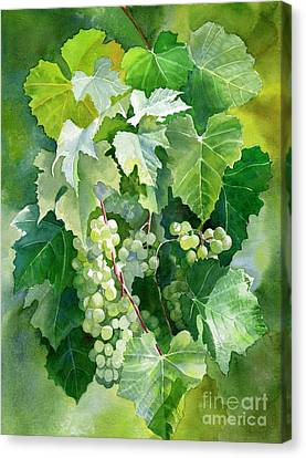 Green Grapes And Leaves Canvas Print by Sharon Freeman
