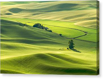Canvas Print featuring the photograph Green Green Grass Of Home by Patricia Davidson