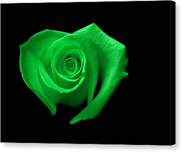 Green Heart-shaped Rose Canvas Print by Glennis Siverson