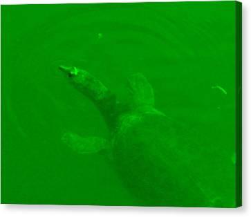 Green Hello Turtle Canvas Print by Nela n Charlie Nelabooks