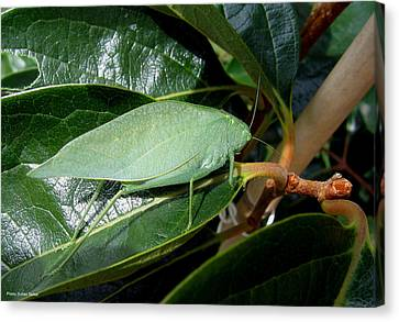 Canvas Print featuring the photograph Green Insect by Suhas Tavkar