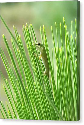 Canvas Print featuring the photograph Green Is Good by Peg Urban