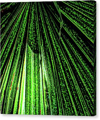 Green Leaf Forest Photo Canvas Print