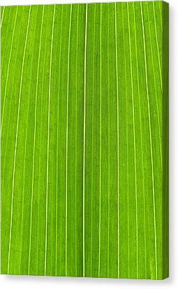 Green Leaf Canvas Print by Frank Tschakert